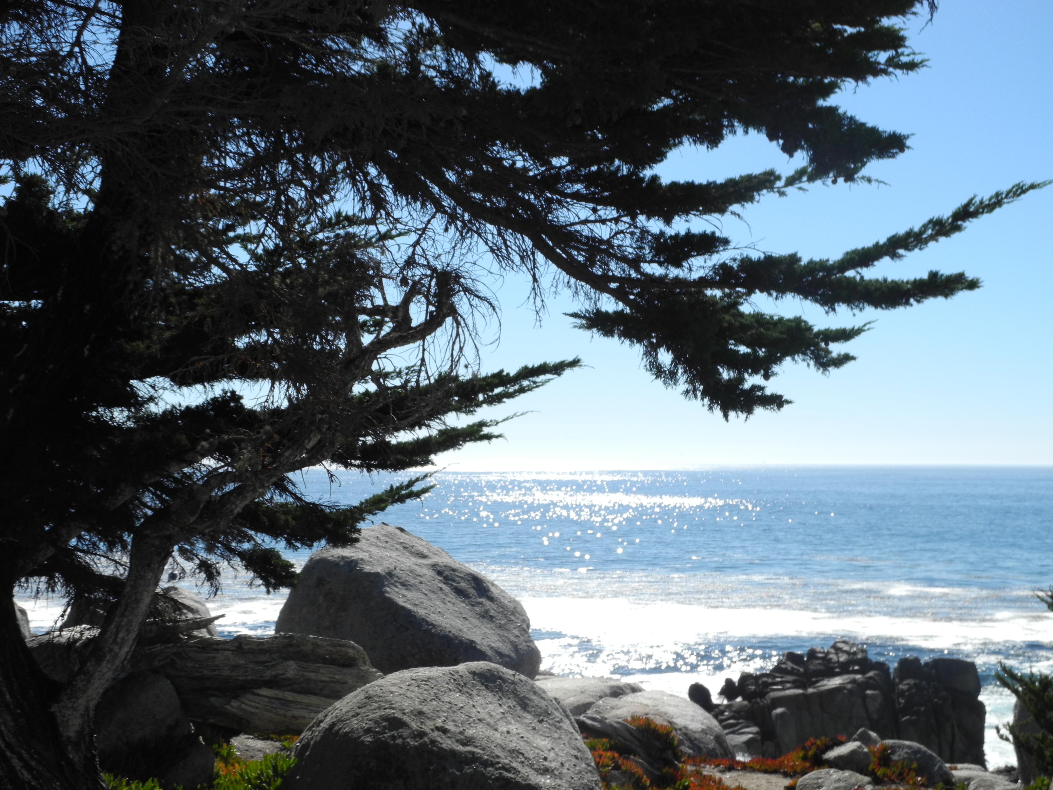Pescadero Point na 17 Mile Drive