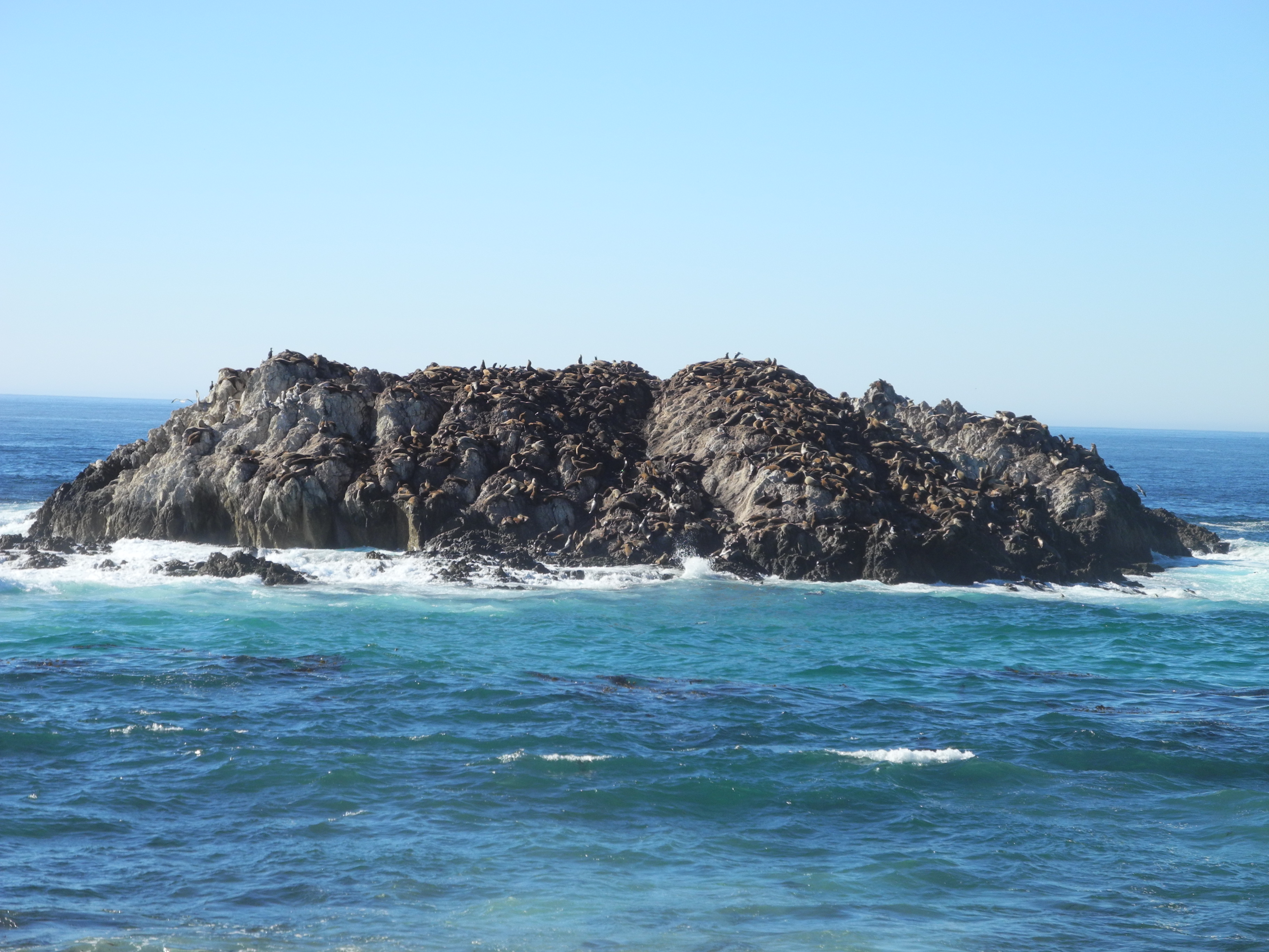 Birds Rock