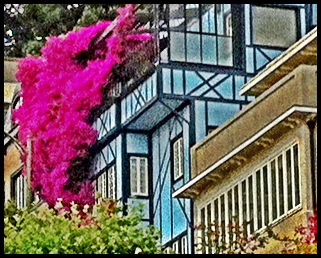 Lombard Street. As flores ficam lindas na primavera e verão. (foto de julho 2013).