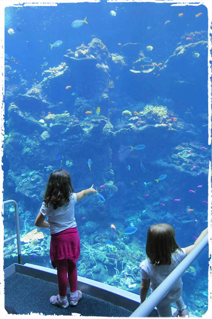 No aquário de Monterey. Foto: Amélia Alsina