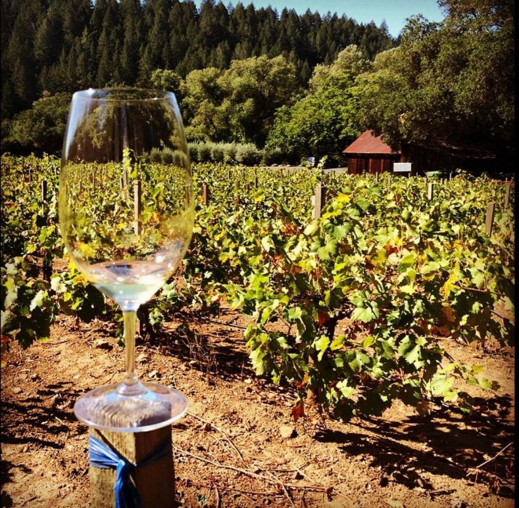 Delícia é degustar um belo vinho  no meio das uvas em crescimento.