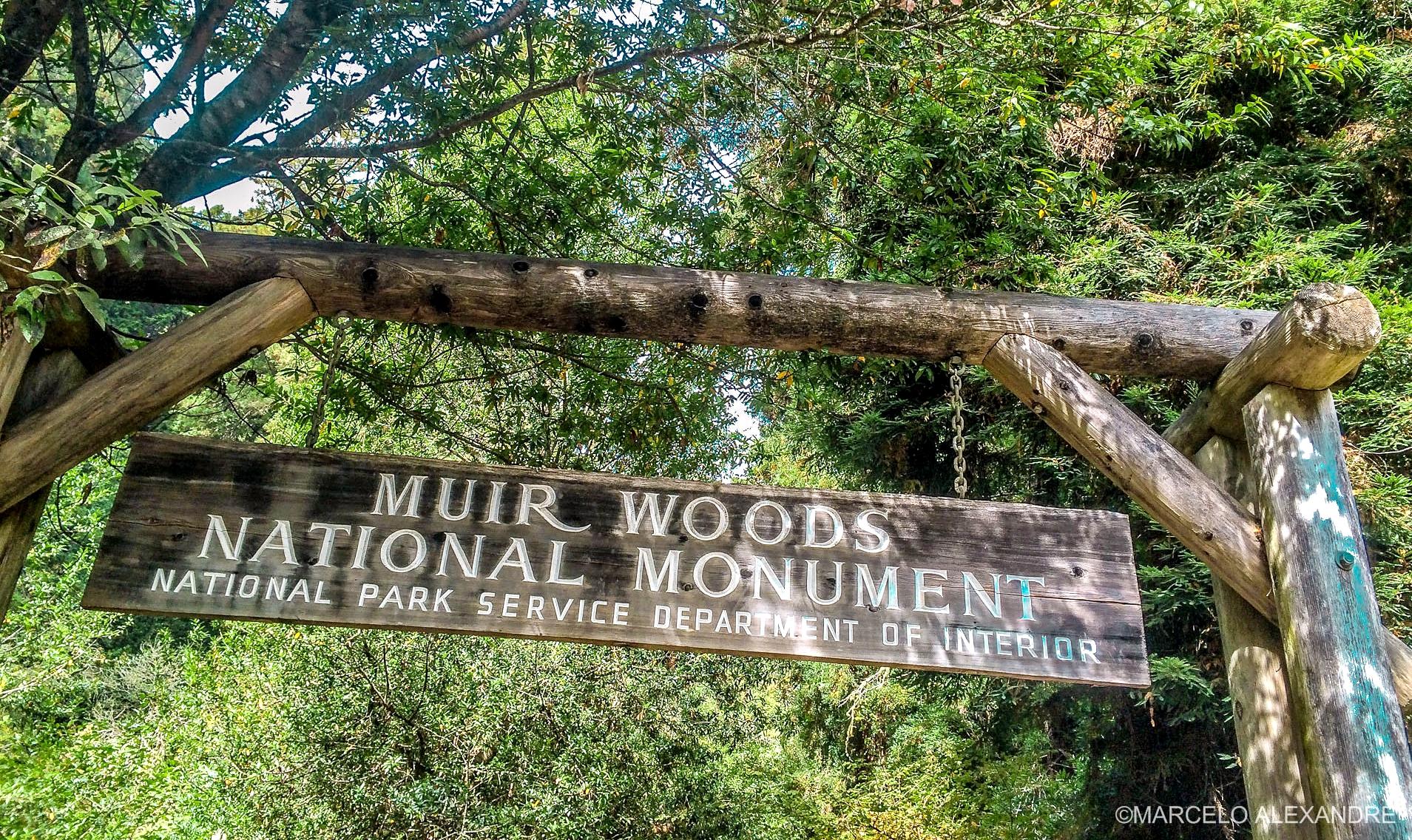 tour em Muir Woods com guia brasileiro
