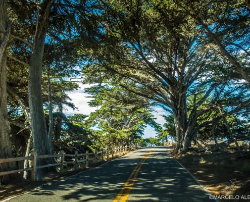 Carmel - 17 Mile Drive