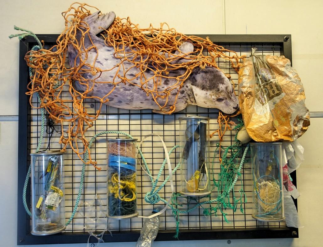 Todo tipo de objetos que não deveriam ser encontrados na barriga dos animais