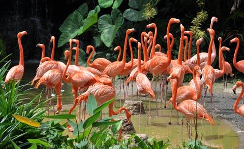 flamingos vegas