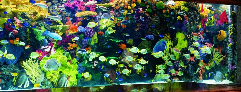 mirage-aquarium