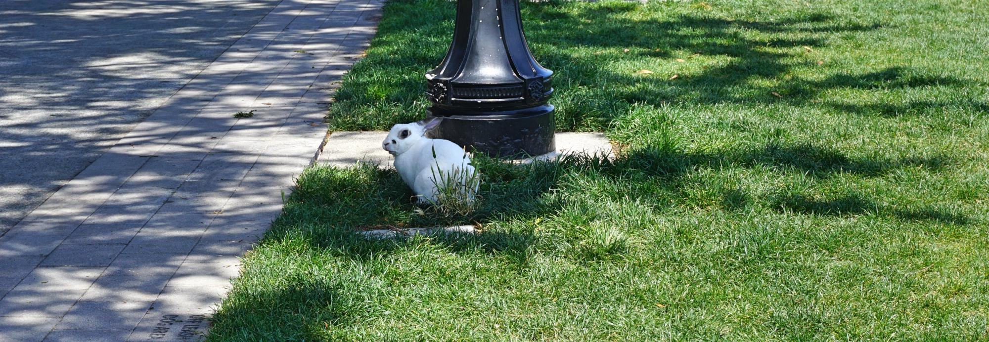 coelho no parque