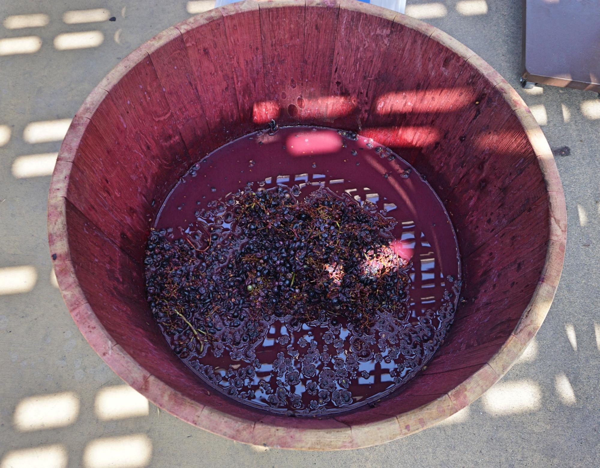 pisar nas uvas em Napa