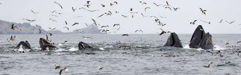 ver baleias em São Francisco